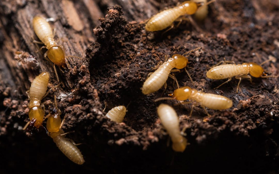 4 Ways to Help Prevent Termites at Home