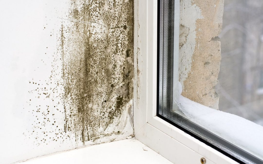 signs of mold include visible growth as seen near this window